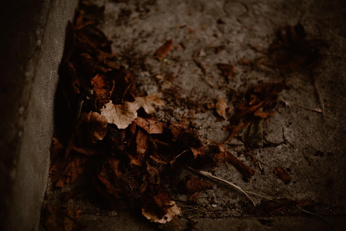 Photo de couple auvergne puy-de-dome feuilles