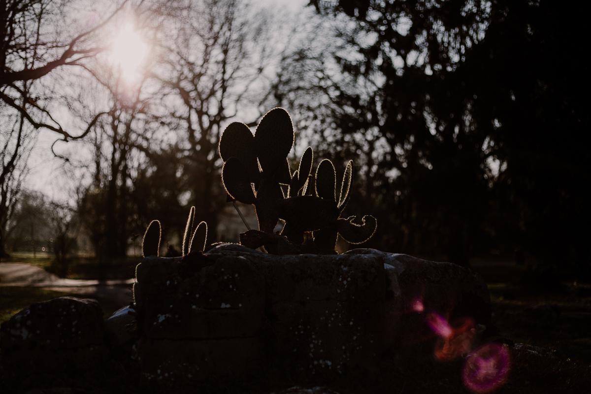 Séance photo de couple au ajrdin botanique de genève lumière