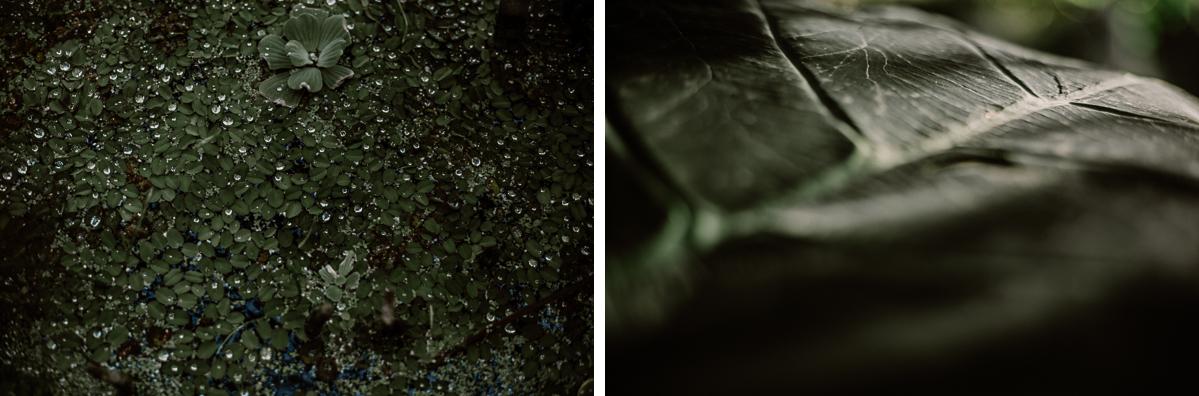 Séance photo de couple au ajrdin botanique de genève eau