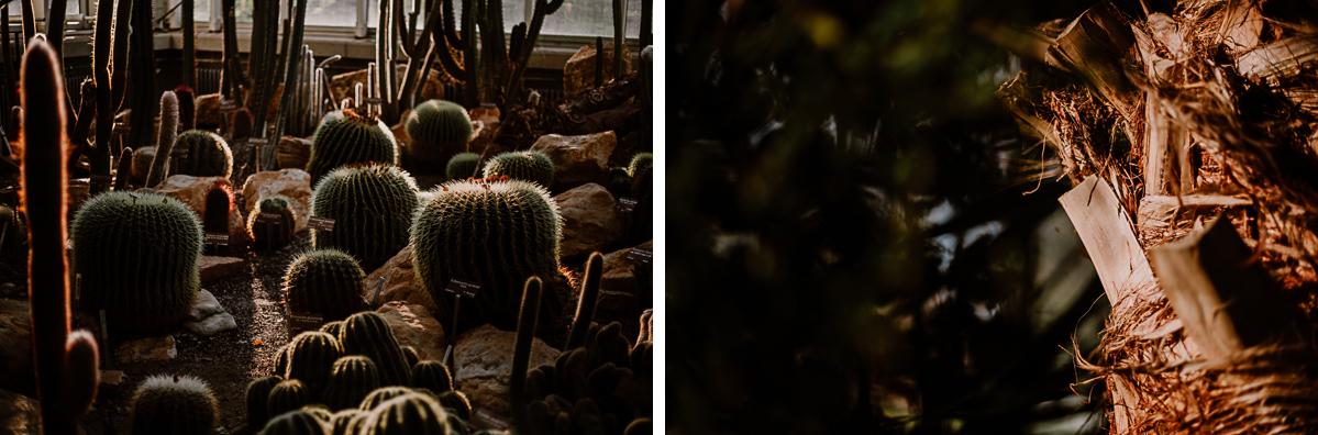 Séance photo de couple au ajrdin botanique de genève palmier