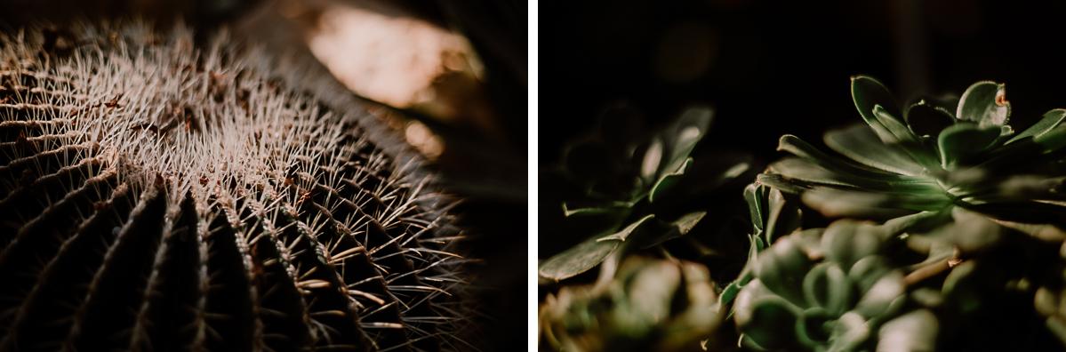 Séance photo de couple au ajrdin botanique de genève cactus
