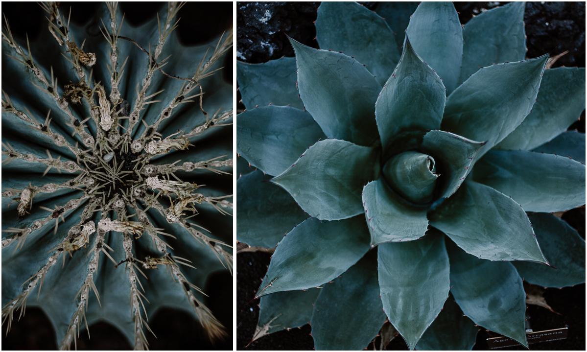 Séance photo de couple au ajrdin botanique de genève bleu