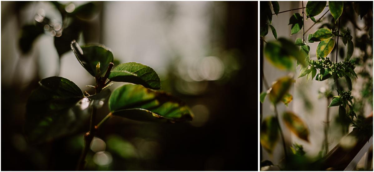 Séance photo de couple au ajrdin botanique de genève verdure